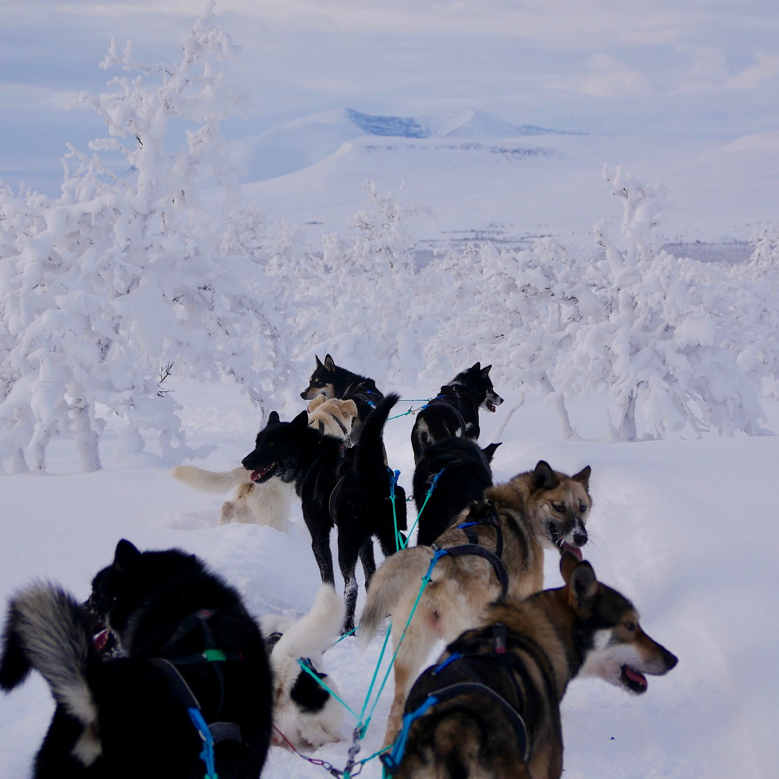 Dog sled expeditions